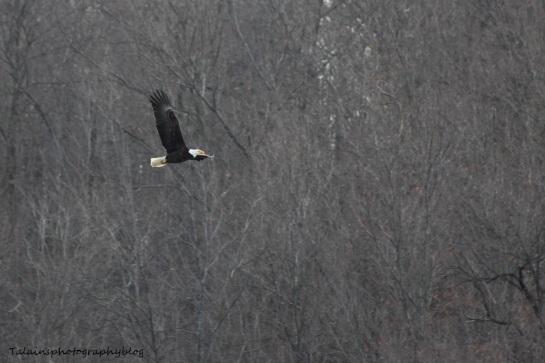 eagle07