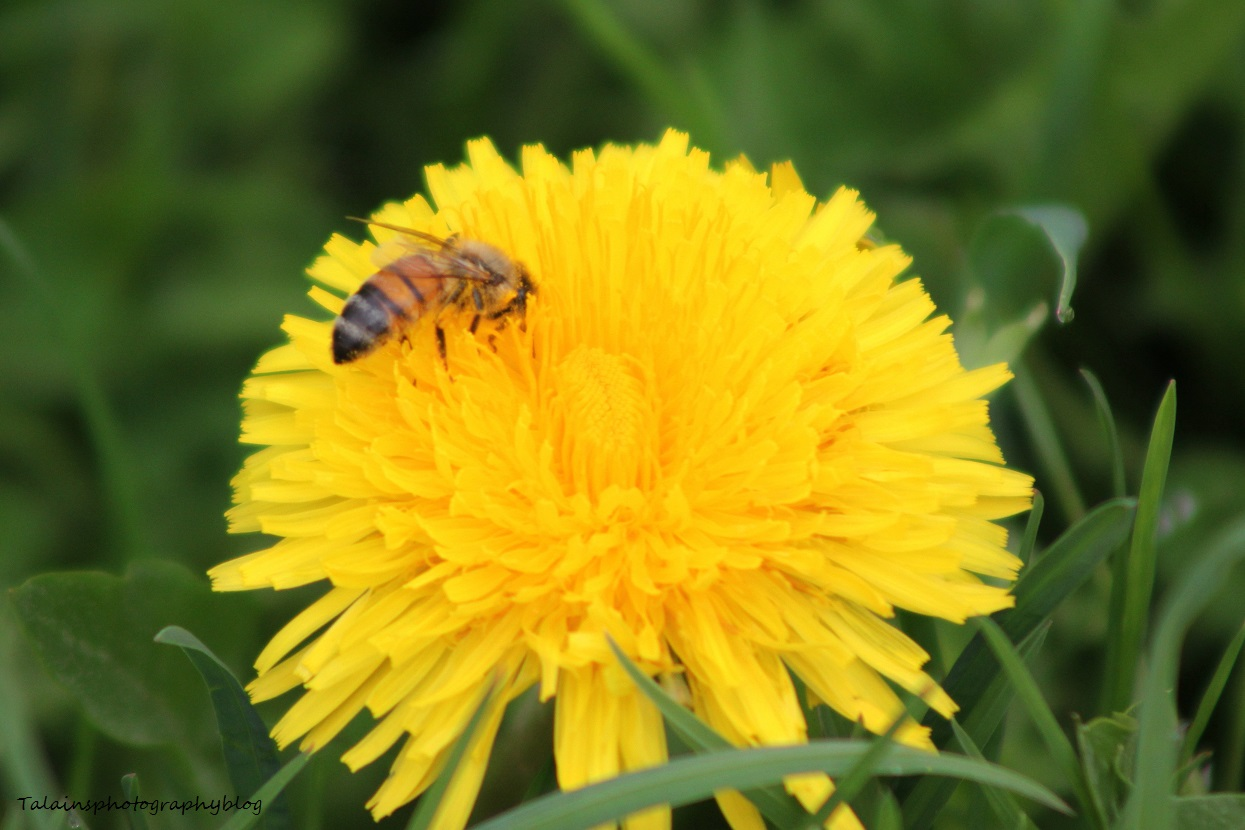 bees&hornets004