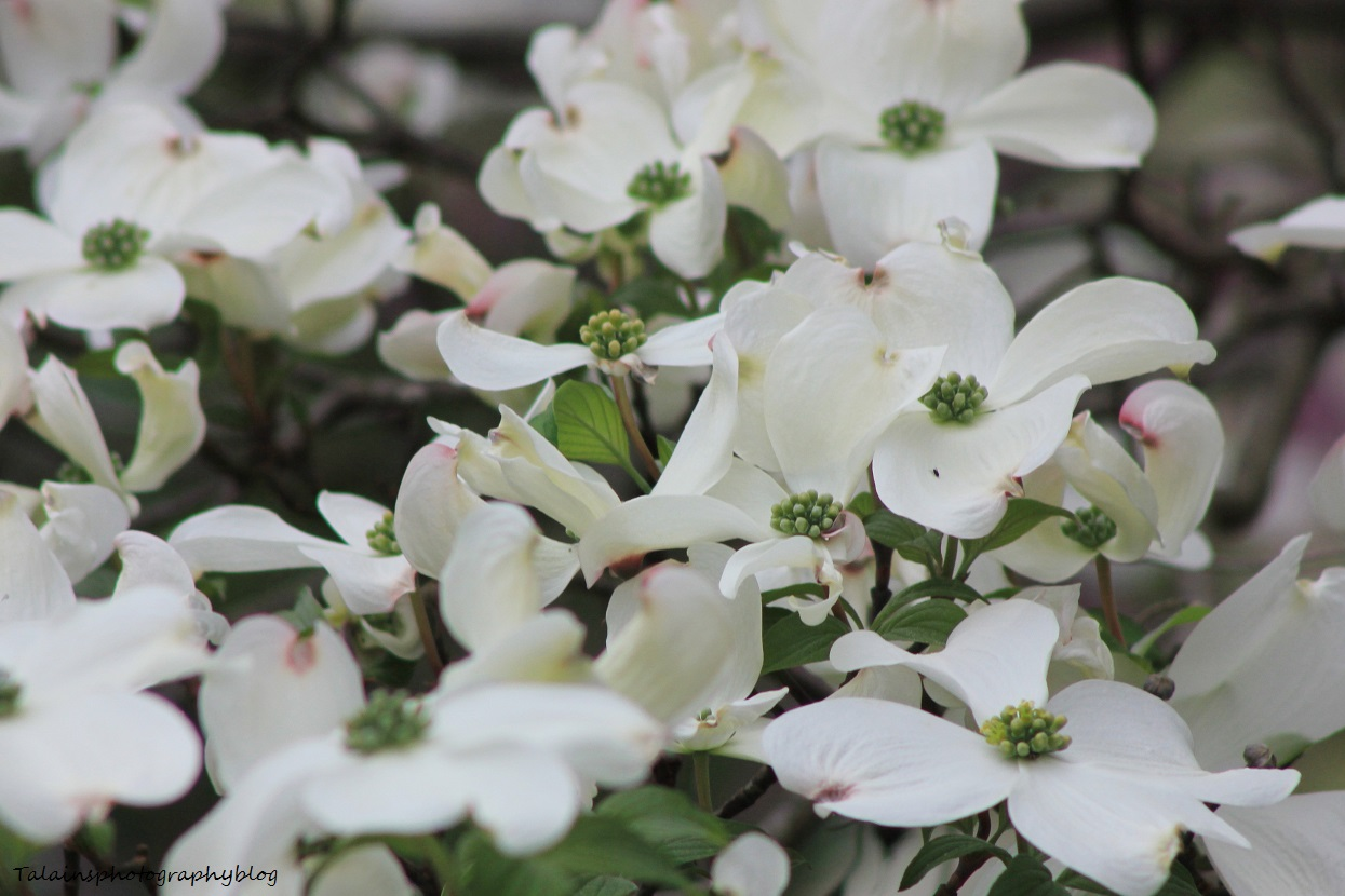 flowers085