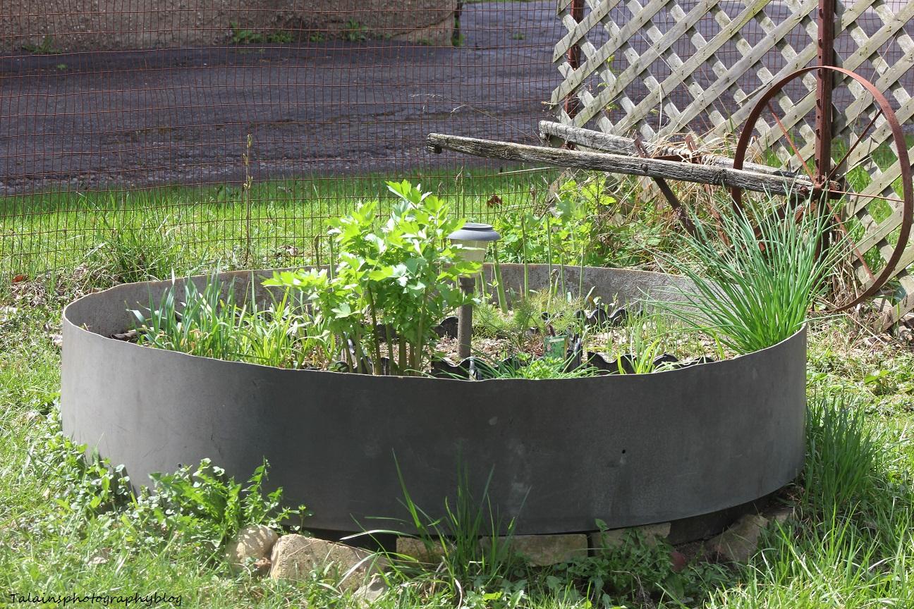 herb garden02