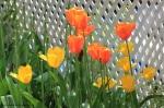 flowers106