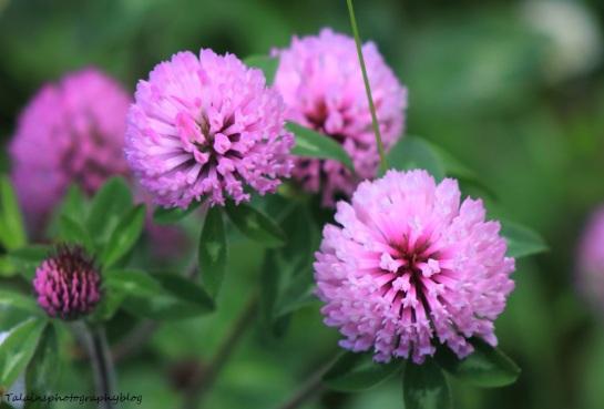 flowers126