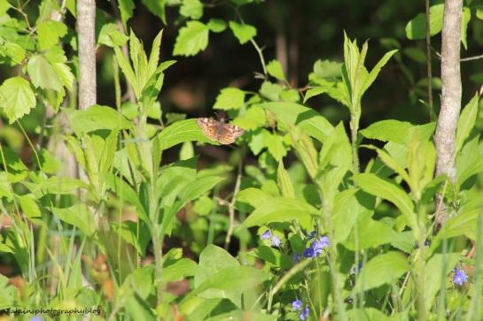 butterfly 002