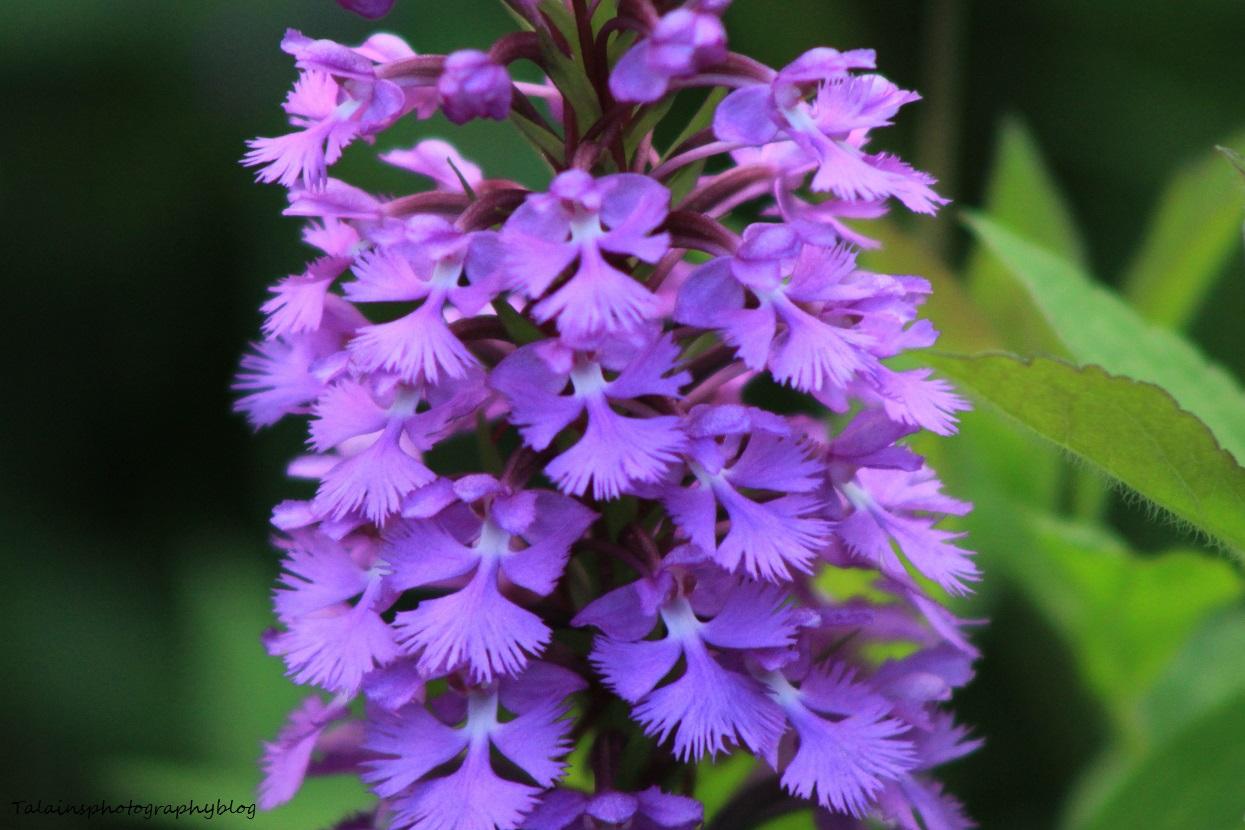 flowers177