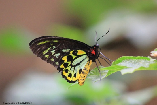 Oneonta Butterfly Conservatory 016