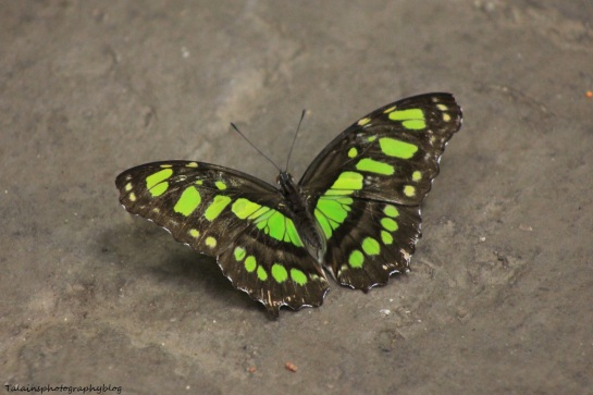 Oneonta Butterfly Conservatory 027