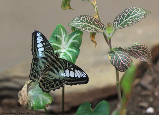Oneonta Butterfly Conservatory 036