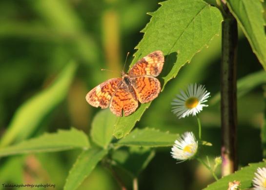 butterfly 034