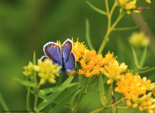 butterfly 098