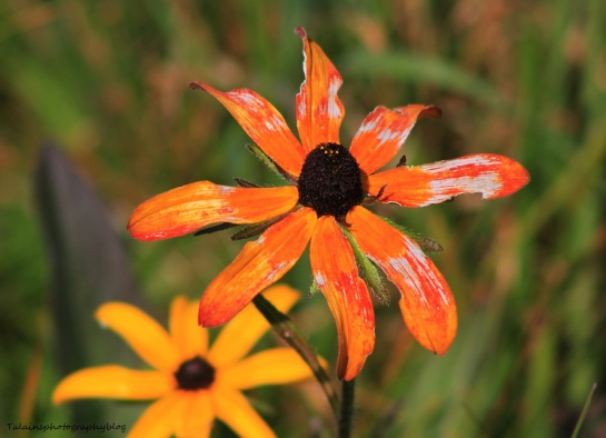 flowers282