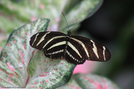 Oneonta Butterfly Conservatory 004