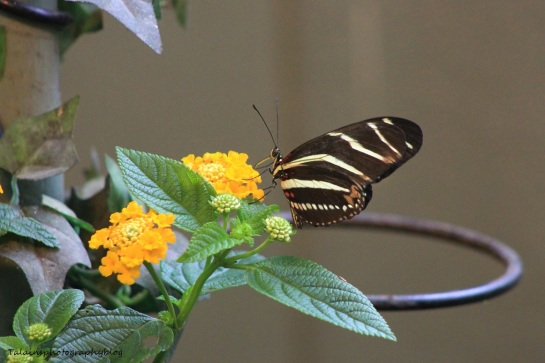 Oneonta Butterfly Conservatory 029