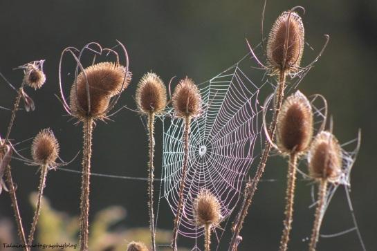web 03