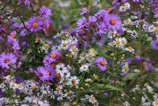 flowers288