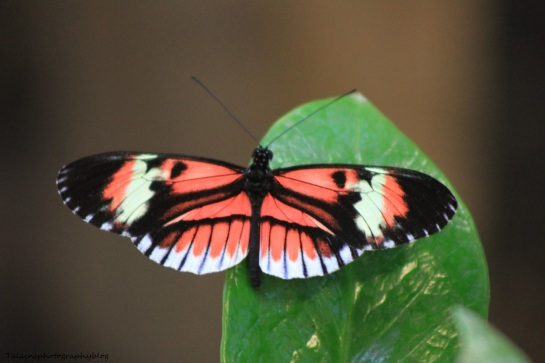 Oneonta Butterfly Conservatory 035