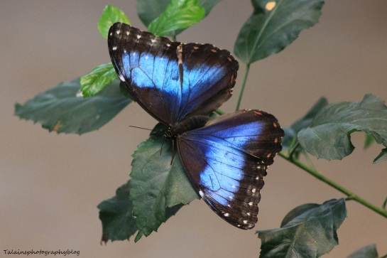 Oneonta Butterfly Conservatory 048