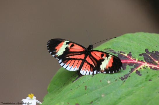 Oneonta Butterfly Conservatory 055