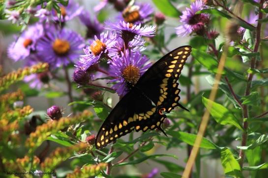 butterfly 128