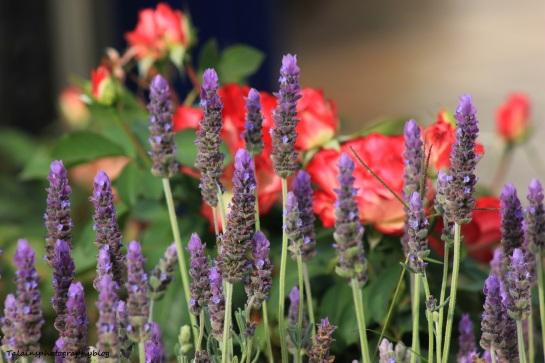 flowers321 Ojai