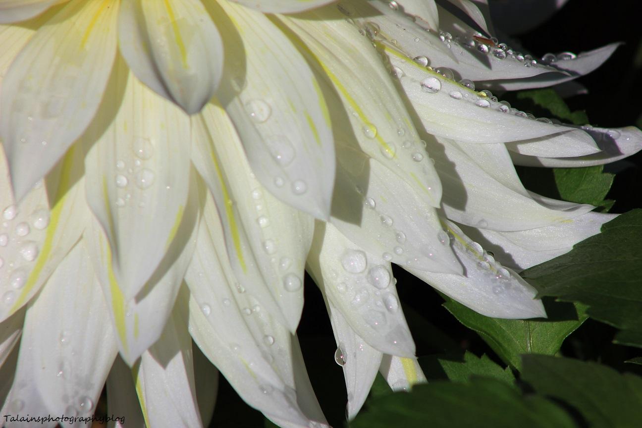flowers338