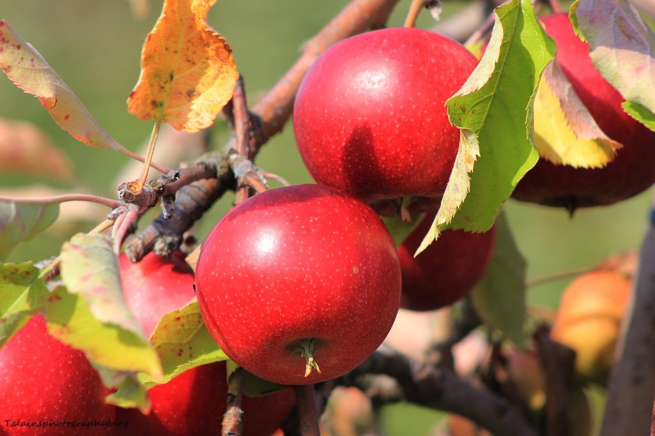 fruit 011