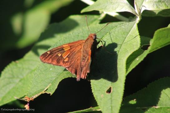 butterfly 065