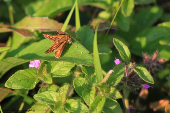 butterfly 070