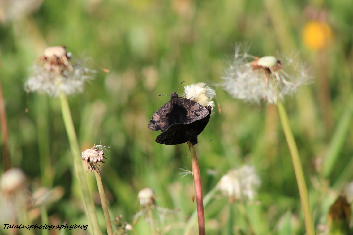 butterfly08