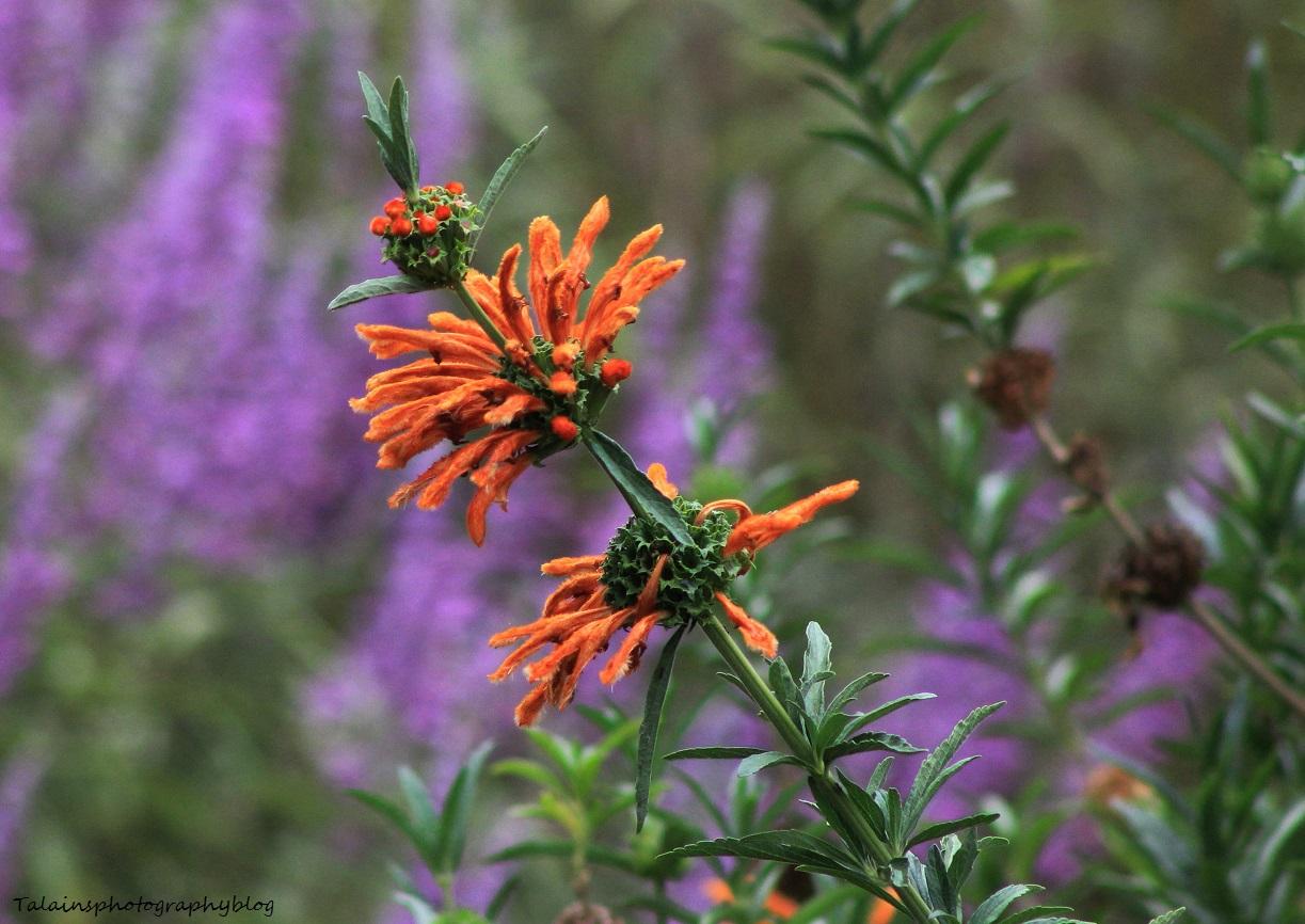 flowers328 Ojai
