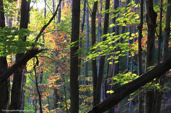 woods 002