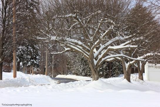 snow 24