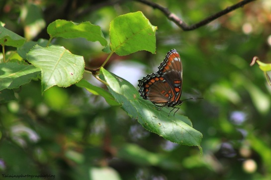 butterfly 089