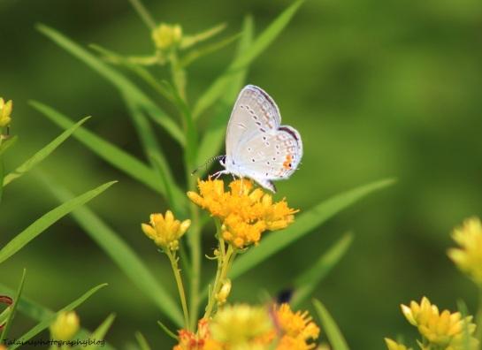 butterfly 096