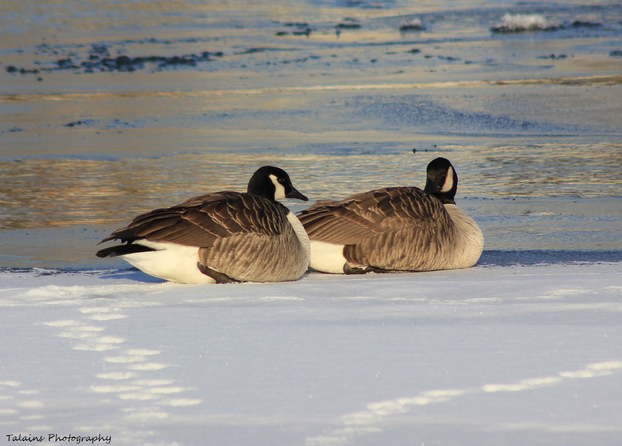 goose lake jewish women dating site On the sw shore of white bear lake, between white bear lake and goose lake  jewish, and muslim  annual rummage sale, agape meal, annual women's .