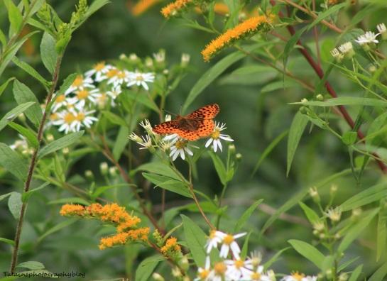butterfly 044