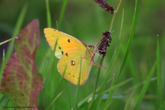 butterfly 123