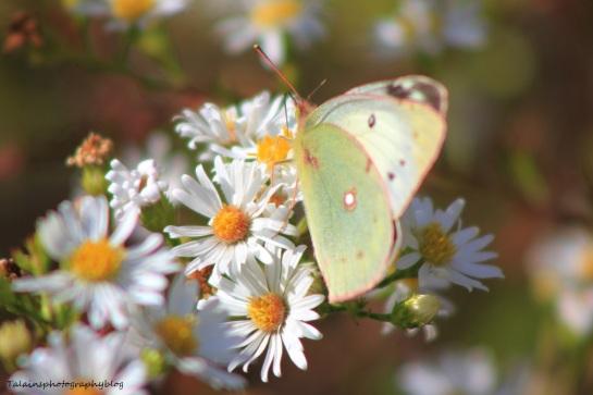 butterfly 134