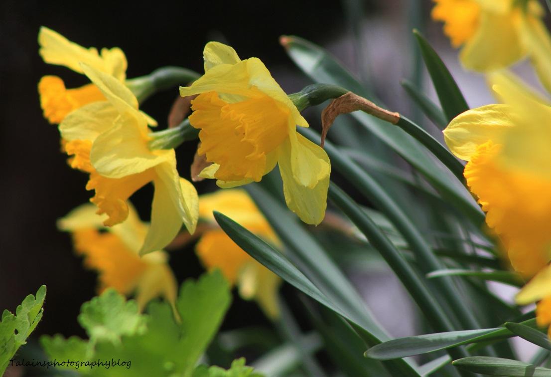 flowers024