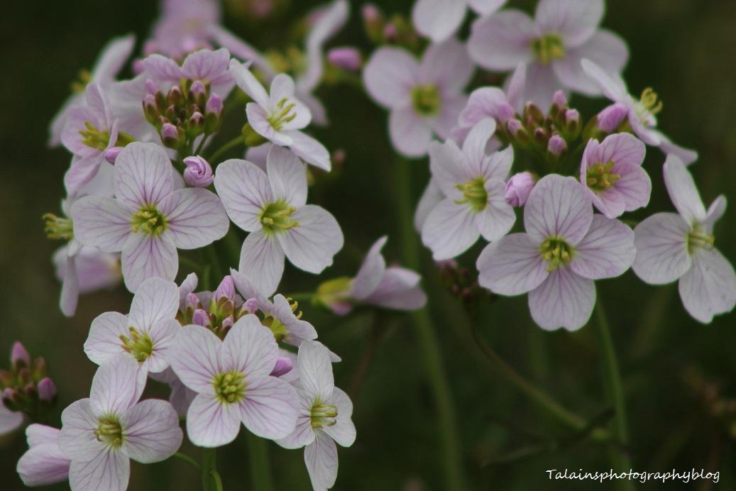 flowers050