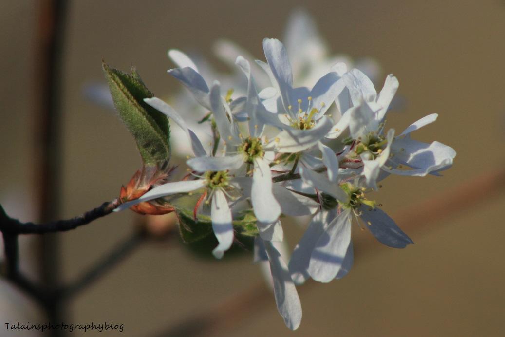 flowers073
