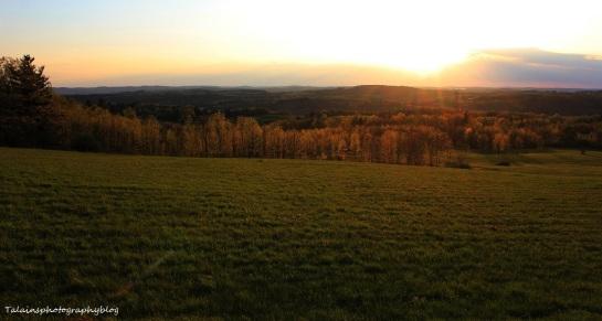 Landscape 008