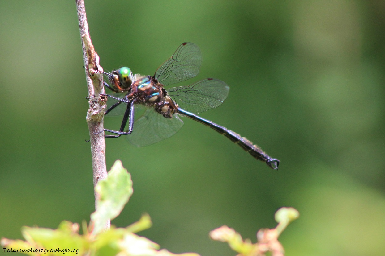 dragonfly 016