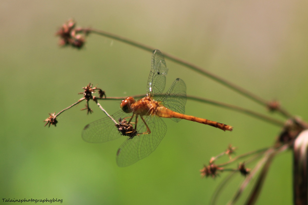 dragonfly 028
