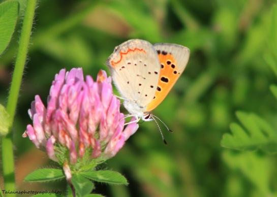 Butterfly 049