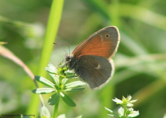 Butterfly 058