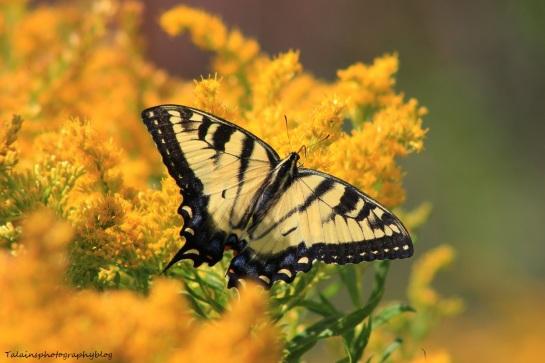 Butterfly 059