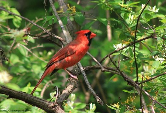 Cardinal 028