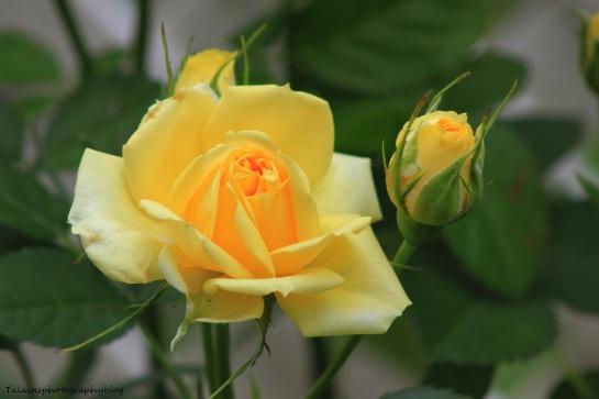 Flowers 272