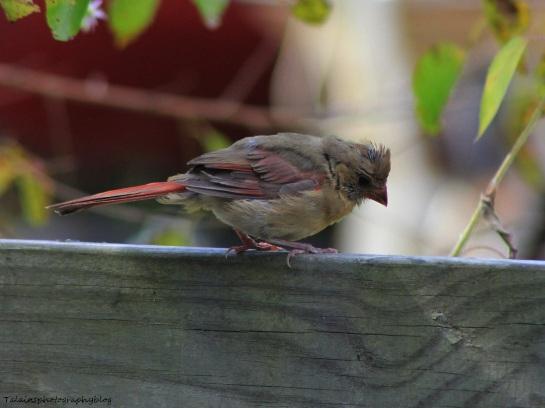 Cardinal 048