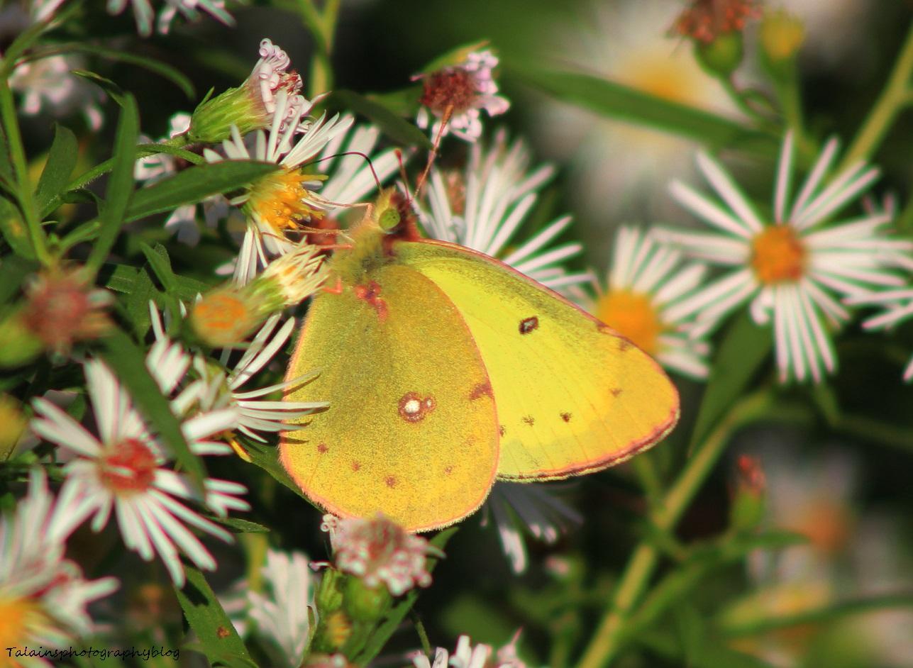 Butterfly 071